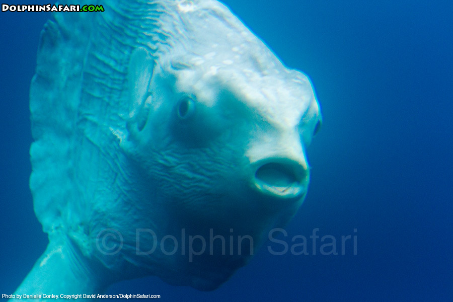 Alien or fish dana point whale watching for The mola mola fish